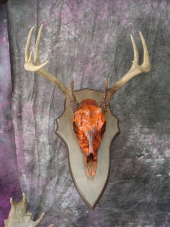 Deer Skull Camo http://mstaxidermist.com/gallery-OTHER.html